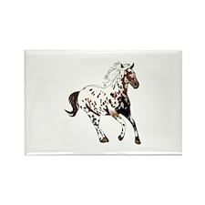 APPALOOSA HORSE Magnets