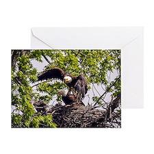 Bald Eagle Family Greeting Card