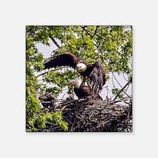 """Bald Eagle Family Square Sticker 3"""" x 3"""""""