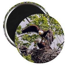 Bald Eagle Family Magnet