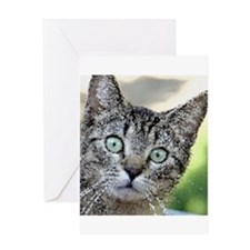 Cat_2015_0203 Greeting Cards