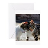 Kitten Greeting Cards (10 Pack)