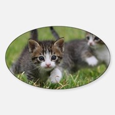 Cat_2015_0102 Decal