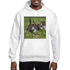 Cat_2015_0102 Hoodie