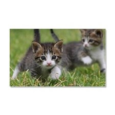 Cat_2015_0102 Car Magnet 20 x 12