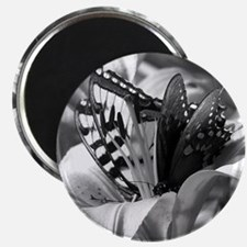 Black and White Butterfly Love Magnets