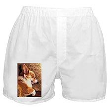 Sleepy Tricolor Corgi Boxer Shorts