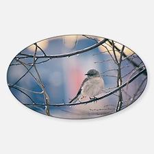 Northern Mockingbird Decal