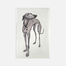 Olive the Whippet Magnets