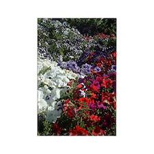 Petunias.jpg Magnets
