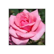 perfect pink rose flower. Sticker