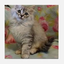 Silver Siberian Kitten floral backgro Tile Coaster