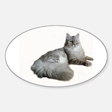 Blue Silver Siberian Tabby cat Laid down W Decal