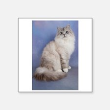 blue tabby colourpoint siberian cat Sticker