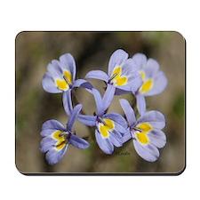 Central Oregon Wild Flowers Mousepad