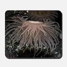 Sea Anemones Mousepad