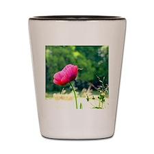Wild Poppy Shot Glass