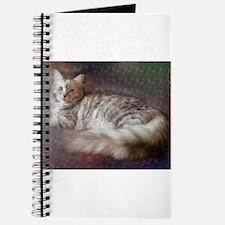 silver siberian cat laid on cushion Journal