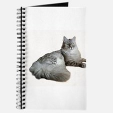 Blue Silver Siberian Tabby cat Laid down White Bac