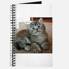 Cute Silver Siberian kitten on carpet Journal