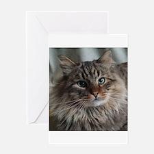 Siberian Tabby Cat face Greeting Cards