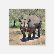 "Rhinoceros Square Sticker 3"" x 3"""