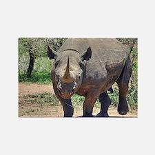 Rhinoceros Magnets