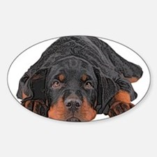 Colored Pencil Drawing Rotweiler Puppy Eye Decal