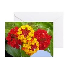 Red And Yellow Lantana #2 Greeting Cards