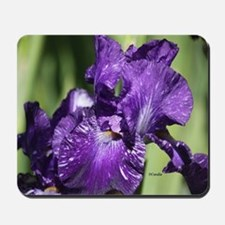 Purple White Bearded Iris Flower Mousepad