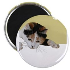 calico cat Magnets