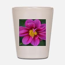 dahlia flower bloom Shot Glass