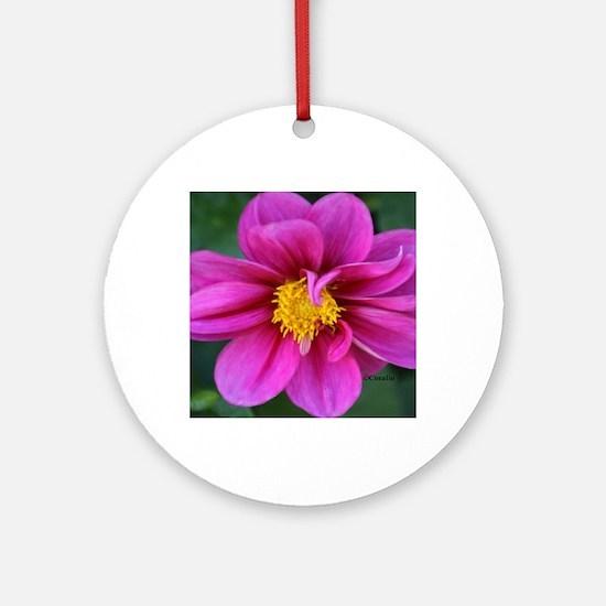 dahlia flower bloom Ornament (Round)