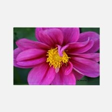 dahlia flower bloom Magnets