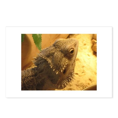 Reptile Rescue Den Postcards (Package of 8)