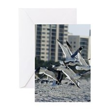 Seagulls Greeting Cards