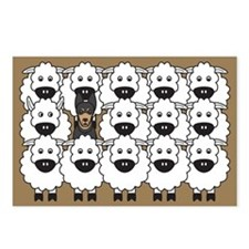 Kelpie and Sheep Postcards (Package of 8)