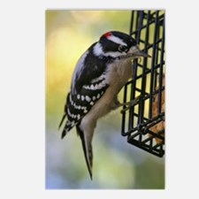 Woodpecker Postcards (Package of 8)