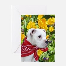 white boxer puppy in tulips Greeting Cards