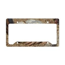 Hermit Crabs Rock License Plate Holder