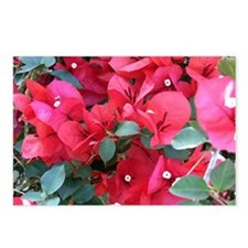 Red Flowers Postcards (package Of 8)