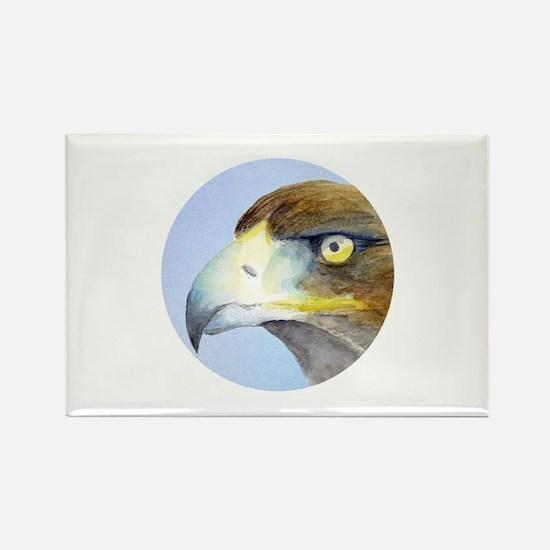 Bird of Prey Hawk Magnets
