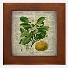 vintage botanical orange Framed Tile