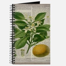 vintage botanical orange Journal