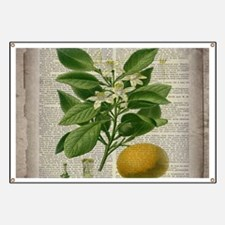 vintage botanical orange Banner