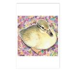 Snowy Mallard Duckling Postcards (Package of 8)