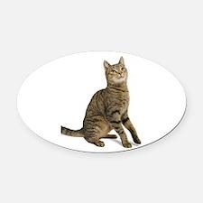 cat tabby Oval Car Magnet
