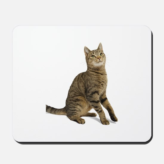 cat tabby Mousepad
