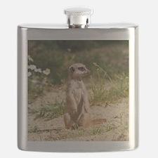 Cool Meerkat Flask