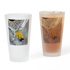 Yellow Tail Drinking Glass